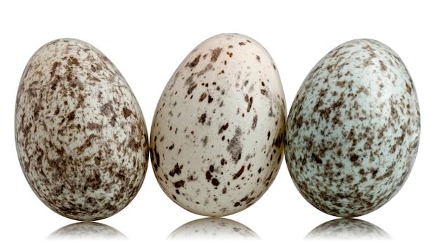 Trois œufs de moineau domestique (passer domesticus)