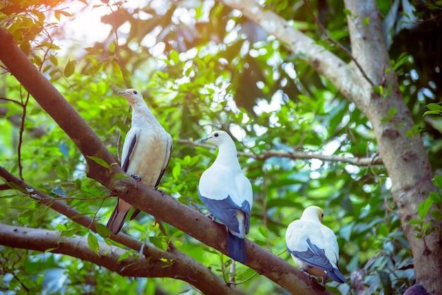 Trois oiseaux blancs sur une branche d'arbre dans la forêt.