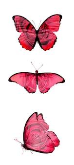 Trois papillons avec un motif de roses sur les ailes. isolé sur fond blanc