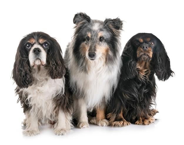 Trois petits chiens