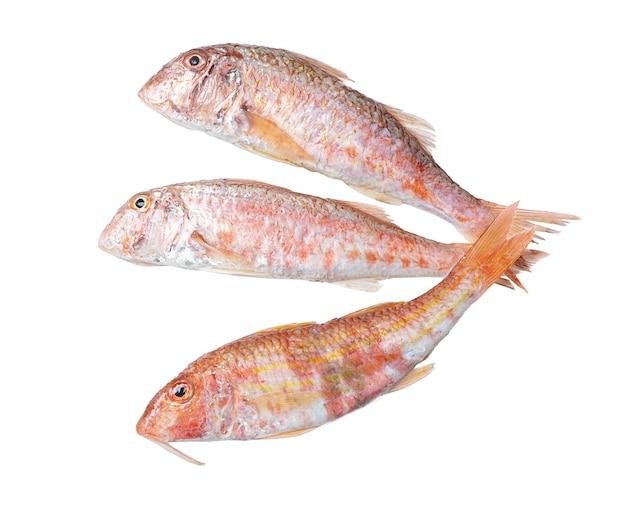 Trois poissons rougets frais sur une surface blanche