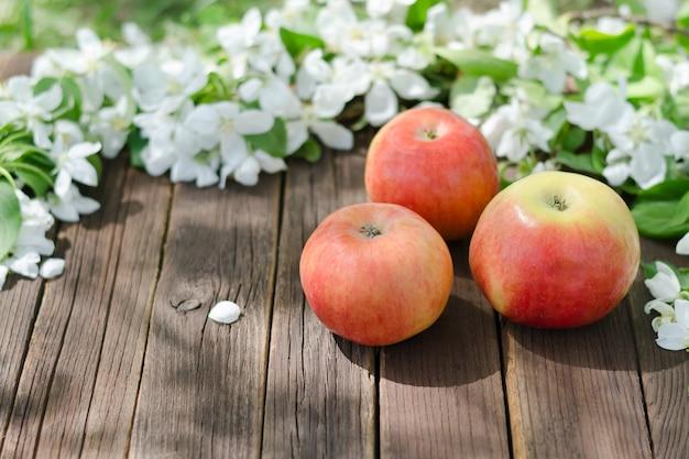 Trois pommes mûres et des fleurs de pomme.