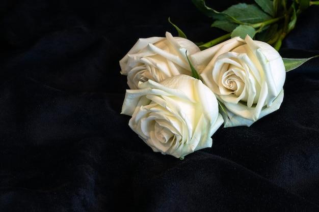 Trois roses blanches sur tissu velours noir