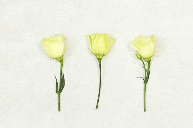 Trois roses sur fond gris
