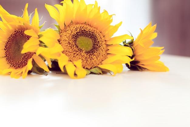 Trois tournesols jaunes sur blanc