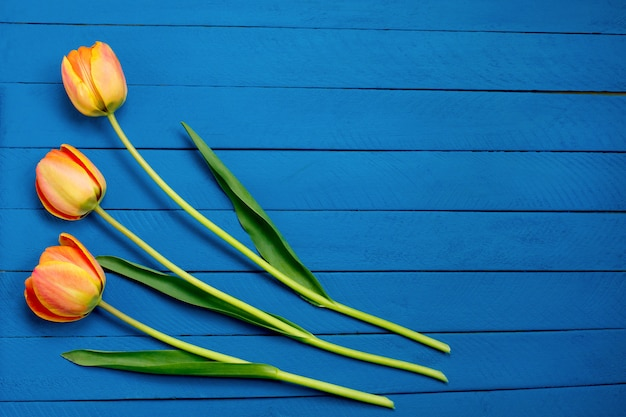 Trois tulipes sur bois bleu