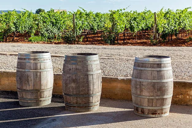 Trois tuyaux pour la fermentation du vin se tiennent sur le fond du vignoble, des tuyaux pour la fermentation du vin