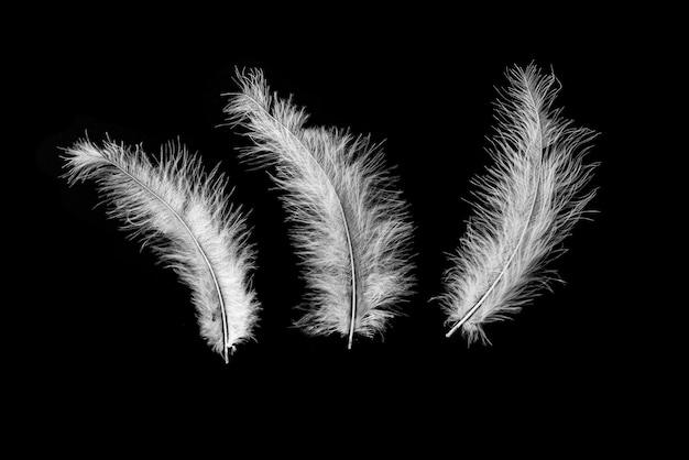 Trois vraies plumes de cygne naturelles volantes isolées sur fond noir