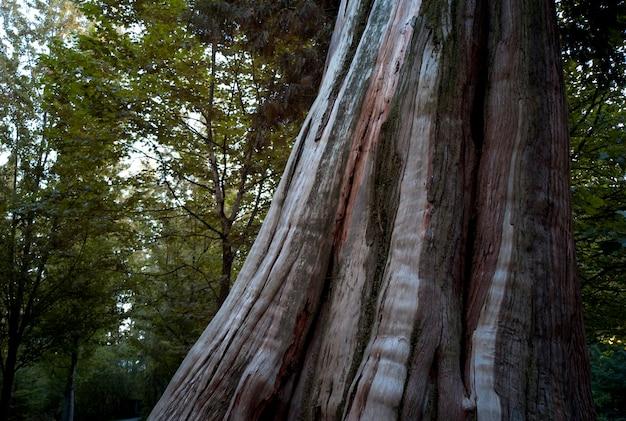 Tronc d'arbre dans le parc stanley à vancouver, colombie-britannique, canada