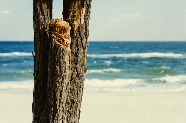 Tronc de l'arbre sur un fond de mer bleue