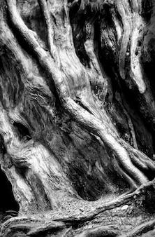 Tronc d'arbre, gros plan