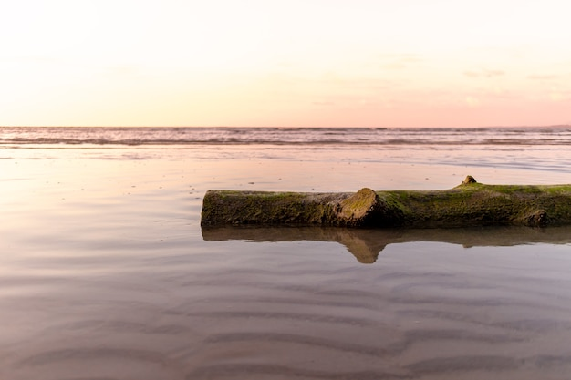 Le tronc d'arbre mort gisait sur le concept de plage de calme