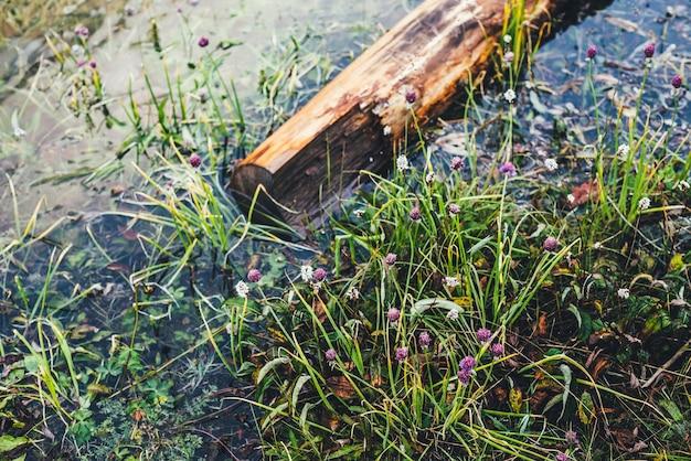 Le tronc d'arbre tombé pourri flotte dans l'eau calme près du rivage avec une flore riche