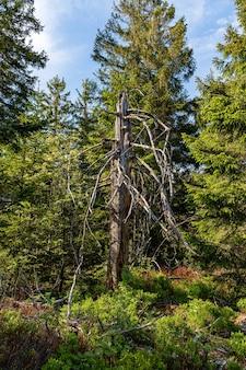 Tronc nu dans la forêt