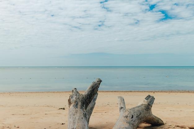 Tronc de pin mourant gisait sur une plage tropicale