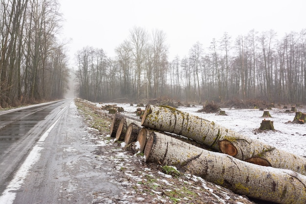 Des troncs d'arbres coupés près de la route en attente d'être transportés à l'usine de meubles