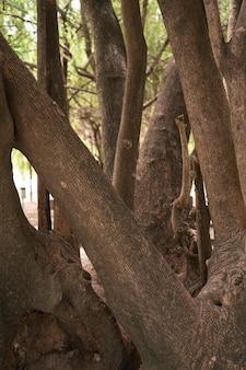 Troncs d'arbres à grosses racines dans le parc