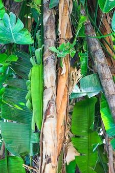 Troncs et feuilles de plantes tropicales