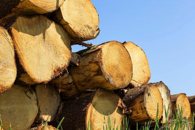 Troncs de pin naturel