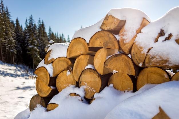 Troncs secs coupés en bois recouverts de neige à l'extérieur