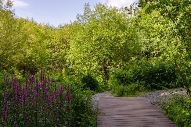 Trottoir en bois et chemins ramifiés dans un parc naturel aux fleurs violettes