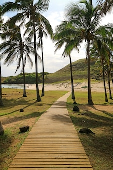 Trottoir de bois à la lumière du soleil menant à la plage d'anakena sur l'île de pâques du chili