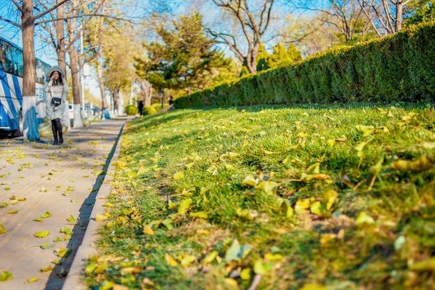 Le trottoir est recouvert de feuilles jaunes. pelouse verte avec des feuilles tombées.