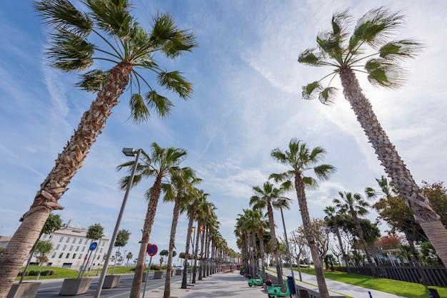 Trottoir exotique avec des palmiers