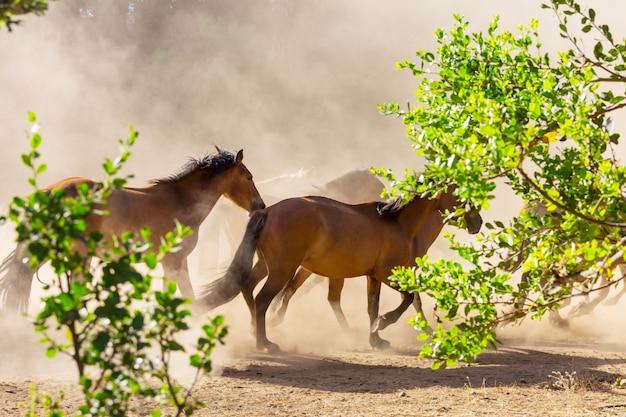 Troupeau de chevaux courir sur les pâturages au chili, en amérique du sud
