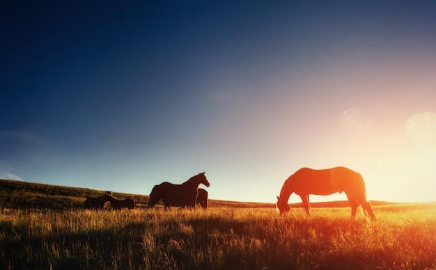 Le troupeau de chevaux dans les montagnes