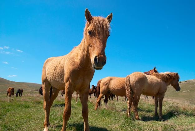 Troupeau de chevaux sur le terrain avec un ciel bleu