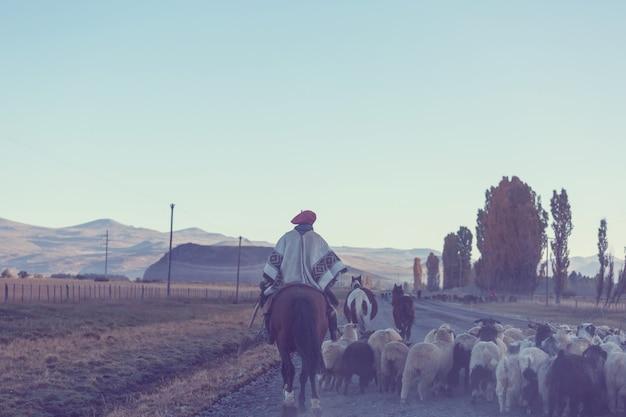 Troupeau de chèvres gauchos ahd dans les montagnes de patagonie, argentine
