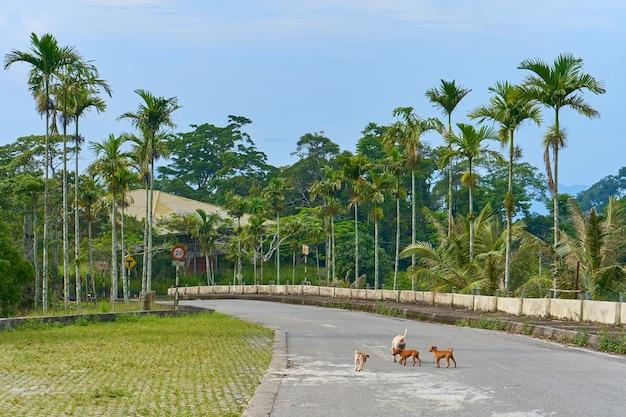 Un troupeau de chiots sauvages sans abri sur la route.