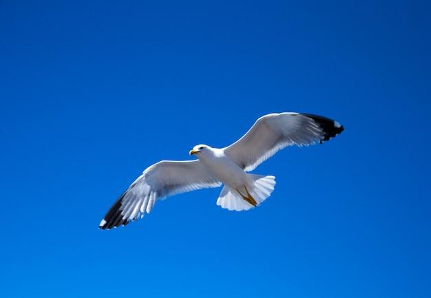 Troupeau dans le ciel