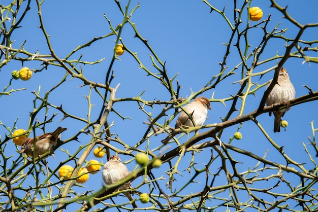 Troupeau de moineaux assis sur des branches d'arbre