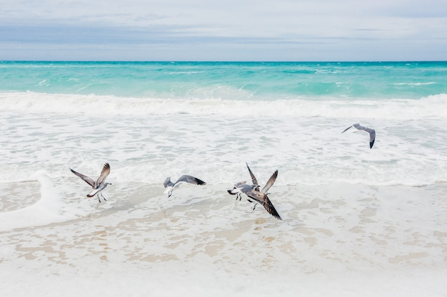 Troupeau de mouettes au bord de la mer