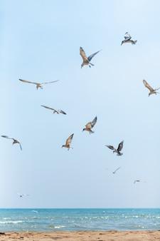 Un troupeau de mouettes encerclant dans le ciel près de la côte de la mer
