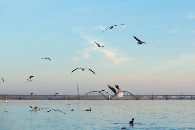 Un troupeau de mouettes sur les rives de la rivière de la ville.