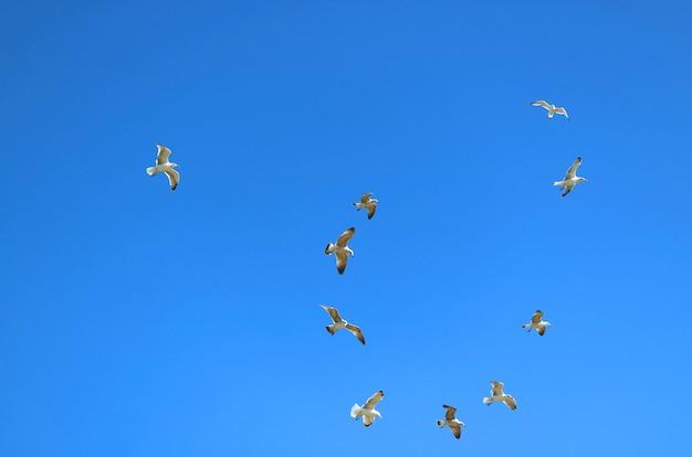Troupeau de mouettes volant sur un ciel bleu clair et éclatant