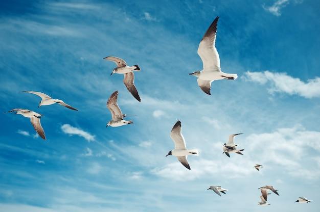 Troupeau de mouettes volant sur le ciel bleu avec des oiseaux de fond de nuages