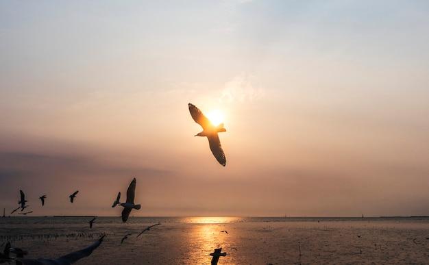 Troupeau de mouettes volant dans le ciel