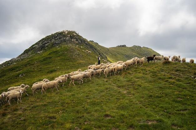 Troupeau de moutons sur une colline couverte de verdure et de rochers sous un ciel nuageux