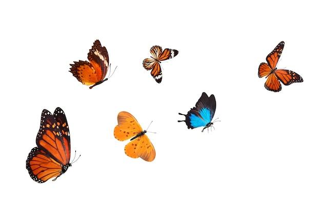 Troupeau de papillons bleus tropicaux isolé sur fond blanc