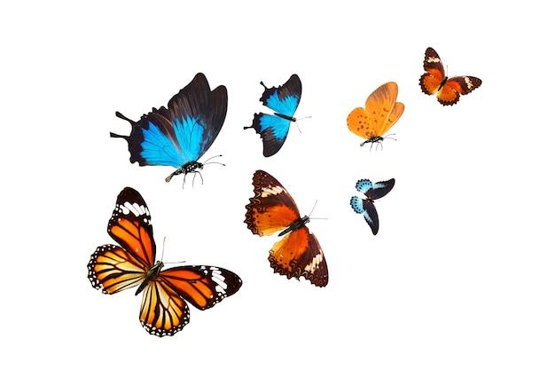 Troupeau de papillons tropicaux isolé sur fond blanc
