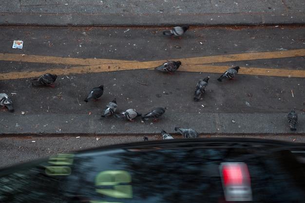 Troupeau de pigeons sur route en béton