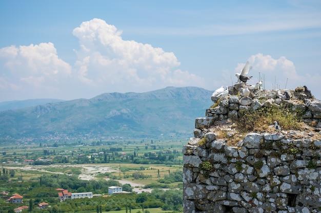 Un troupeau de pigeons s'installe sur les murs d'une ancienne forteresse.