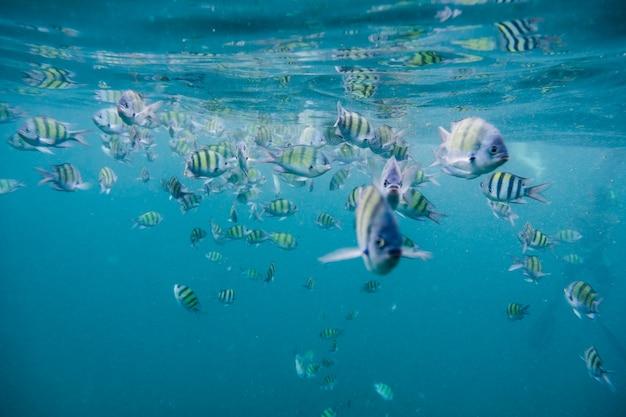 Troupeau de poissons en mer d'andaman
