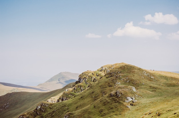 Troupeau de vaches broutant dans la colline