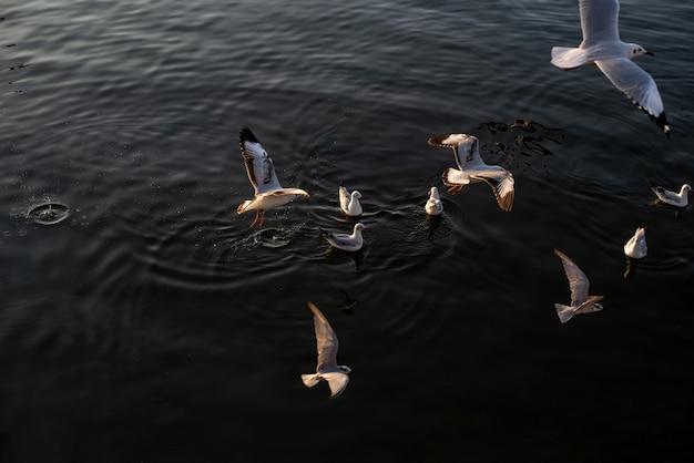 Des troupeaux de mouettes flottent dans la mer.