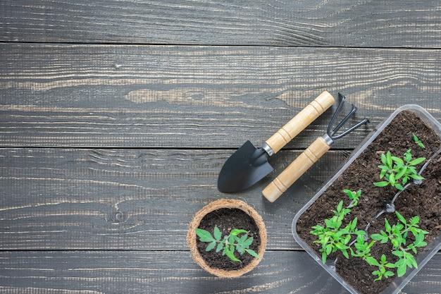 Truelle de jardin et râteaux et pots écologiques avec de jeunes plants de tomates vertes sur mur en bois